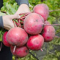 Семена редьки КС 2078 F1, Kitano 50 грамм | профессиональные
