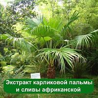 Экстракт карликовой пальмы и сливы африканской, 100 грамм