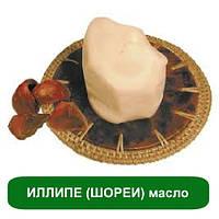 ИЛЛИПЕ (ШОРЕИ) масло, 25 грамм