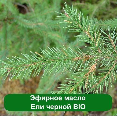 Эфирное масло Ели черной BIO, 10 мл