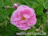 Душистая вода Розовая, 100 мл