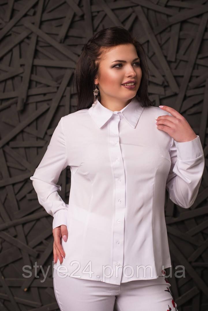Жіноча батальна блуза на гудзики .Р-ри 50-56