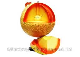 Глобус-модель Будова сонця
