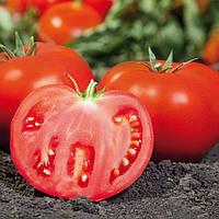 KS 898 F1 - семена томата, Kitano 500 семян