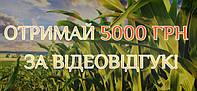 Посій кукурудзу WOODSTOCK (Вудсток) – отримай 5 000 грн за найкращий відеовідгук!