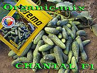 Огурец корнишон Шанталь f1 / Chantal f1, ТМ SEMO (Чехия), упаковка 1000 семян