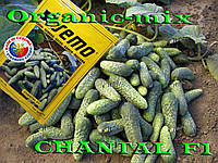 Шанталь f1 / Chantal f1, ТМ SEMO (Чехия),  1000 семян
