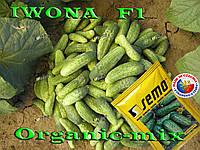 Ивонна f1 / Iwona f1, ТМ SEMO (Чехия), 1000 семян
