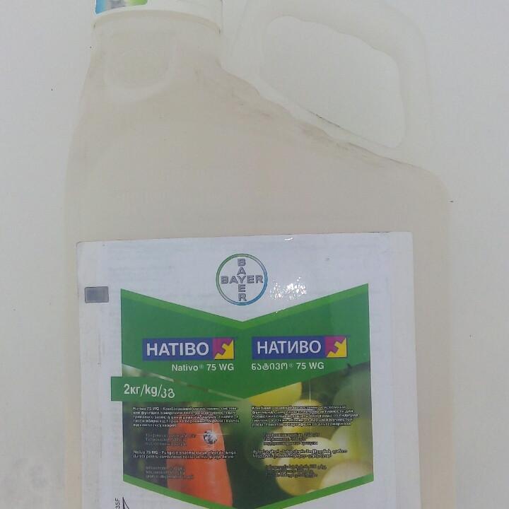 Фунгіцид НАТІВО, 2кг, Bayer