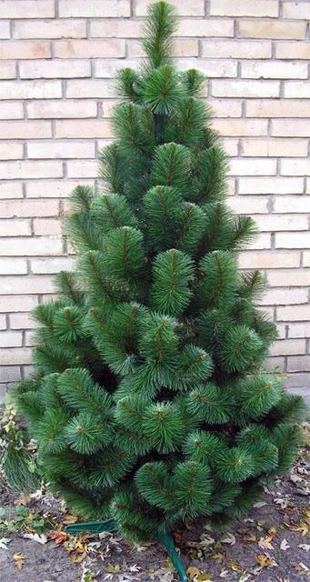 🎄 Сосна искусственная новогодняя зеленая 0.70 м.