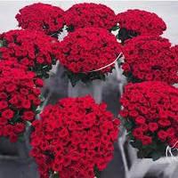 Доставка цветов по киеву 1001 роза 33999грн