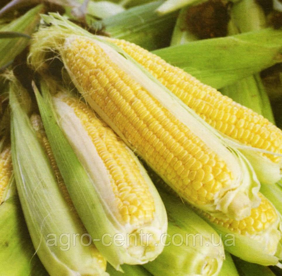 Семена кукурузы ДК 315, ФАО 310