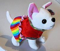 Мягкая игрушка собачка Чихуахуа 25  см.