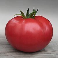 Семена томата Кибо F1, Kitano 500 семян | профессиональные, фото 1