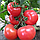 Семена томата Китару F1 (КС 14 F1), Kitano 500 семян   профессиональные, фото 2