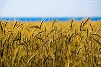 Прогресс приходит и аграрный сектор