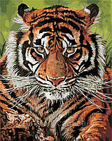 Картина по номерам ArtStory Взгляд тигра 40 х 50 см (арт. AS0393), фото 1