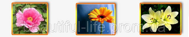 тампоны beautiful life