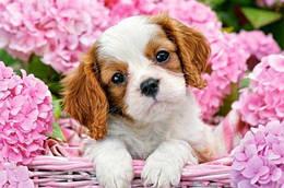 """Пазлы """"Щенок в розовых цветках"""", 500 элементов (сад, цветы, собака, собачка, щенок)"""