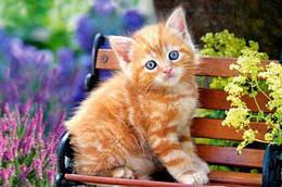 "Пазлы ""Рыжий котёнок"", 500 элементов (рыжий, коты, кошки, котята, кот, кошка, котенок, сад, цветы)"