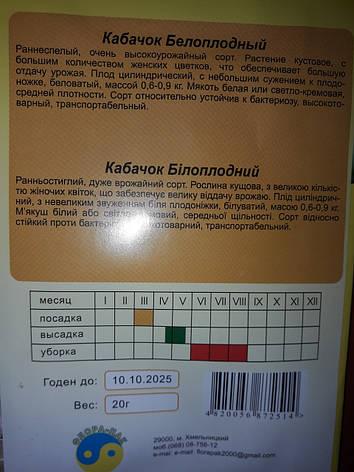 Семена кабачок Белоплодный , фото 2