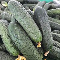 Семена огурца Уникум F1 Lark Seeds от 100 шт (Проф упаковка 100 шт)