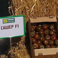 Семена томата индетерминантного Сашер F1 Yuksel Tohum от 100 шт