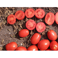 Семена томата детерминантного Апгрейд F1 Еsasem от 1 000 шт