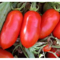 Семена томата детерминантного Гладис F1 Еsasem 1 000 шт