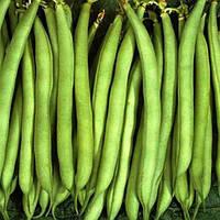 Семена фасоли спаржевой Палома Nunhems 100 шт