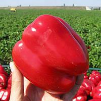 Семена перца Геркулес F1 Clause от 10 шт