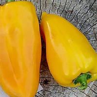 Семена перца Эней Nasko 1 000 шт