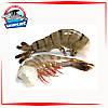 Креветка тигровая без головы 16-20