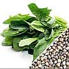 ШПИНАТ Микрозелень, семена зерна шпината органические для проращивания 30 грамм