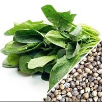 ШПИНАТ Микрозелень, семена зерна шпината органические для проращивания 30 грамм, фото 1