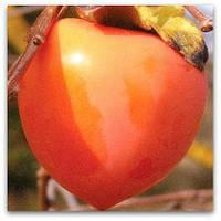 Хурма Бычье сердце 100-150см.