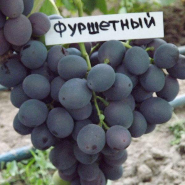 Виноград Фуршетний ОКС