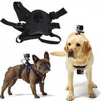 Крепление GoPro на животных (собак, кошек) для экшн камер