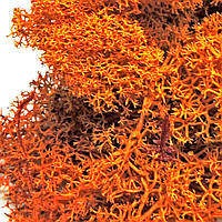 Мох Ягель стабилизированный оранжевый 5г