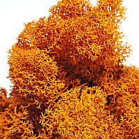 Мох Ягель стабилизированный оранжевый 15г