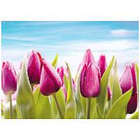 Фотообои Prestige Розовые тюльпаны №11