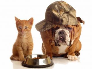Кормушки, поилки для собак и котов