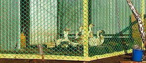 Заборы садовые, сетки от птиц, для ограждения домашней птицы