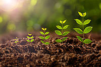 Стимуляторы и регуляторы роста