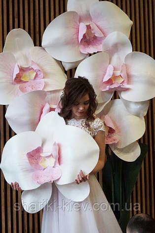 Фотозона Композиция Декор Ростовая Орхидея, фото 2
