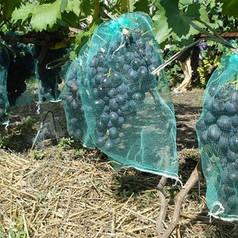 Мешки от ос на виноград зеленые 5 кг, 28*40 см (сетка-мешок для винограда). От ос, мошек и др. насекомых!!!