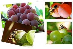 Мешки от ос на виноград красные 2 кг, 22*30 см (сетка-мешок для винограда). От ос, мошек и др. насекомых!!!, фото 2