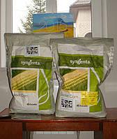 Семена кукурузы сахарной Спирит F1 \ Spirit F1 100 000 семян Syngenta