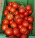 Семена томата Лилос F1 100 шт