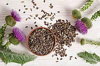 Расторопши пятнистой семена 3 кг, лекарственные, пищевые, урожай 2019 года